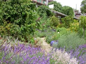 Qui sommes nous le jardin des senteurs for Entretien jardin geneve