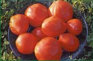 tomate_1